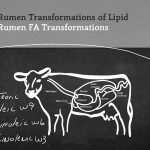 Rumen Transformations of Lipid – Dr. Tom Jenkins