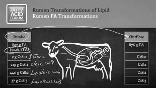 rumen_trans