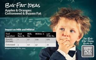 Big Fat Ideas Blog_Cottonseed & Bypass Fat_102314