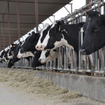 Grouping Cows for Beyond Average Results – Dr. Bill Weiss, The Ohio State University