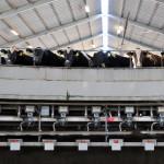 Understanding Milk Protein – Dr. Mike Hutjens
