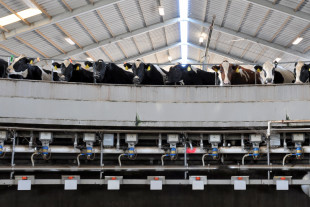 milk-barn (1)