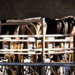 Lactating Dairy Cow Responses to Dietary Cation Anion Difference – Dr. Richard Erdman