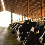 Why is Eating Behavior Important for Milk Yield and Components? – Dr. Trevor DeVries