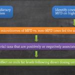 Part 3: Megasphaera elsdenii & Milk Fat Depression: Ruminal Dosing to Establish if M. elsdenii is a Causeative Agent of MFD – Dr. Paul J. Weimer