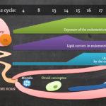 The Role of Fatty Acids On the Development & Survival of Pregnancy  – Dr. Eduardo Ribeiro