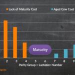 Factors Affecting Productive Lifespan of Dairy Cows – Dr. Albert De Vries